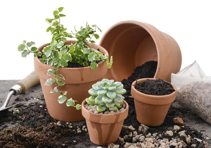 Грунт для комнатных и оранжерейных растений
