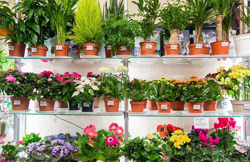 Покупка комнатных растений