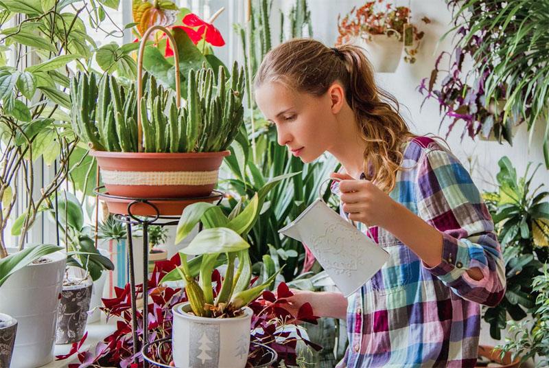 Полив комнатных растений и психология