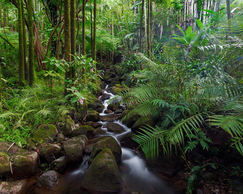 Тропические влажные леса